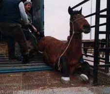Kinship Circle - 2007-10-07 - Horse Slaughter 04