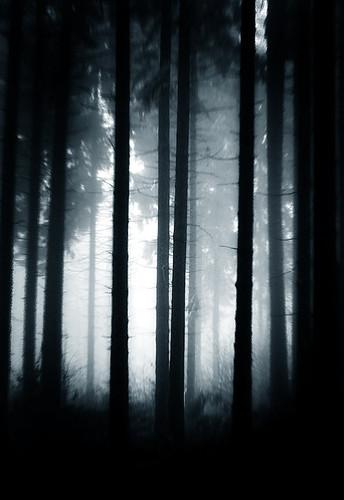 Un bosque tétrico con neblina entre los árboles