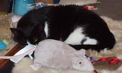 Oh look how happy she is (patchworkgandalf) Tags: november cat furry rat pasta plush catnip rug stuffie 1stnovember kissablekat