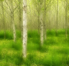 Impressionist Forest (Robert_Brown [bracketed]) Tags: park county trees brown abstract blur green robert oregon forest photography coast state fort stevens impressionist orton clatsop utatafeature