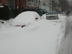 um, yeah. (alist) Tags: winter cambridge dog snow ice weather puppy pug alist annie cambridgemass 02139 alicerobison ajrobison
