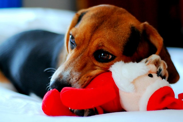 a dog and her santa