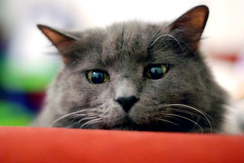 cat 031