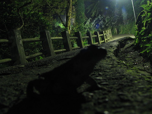 mr. toad and the pathway