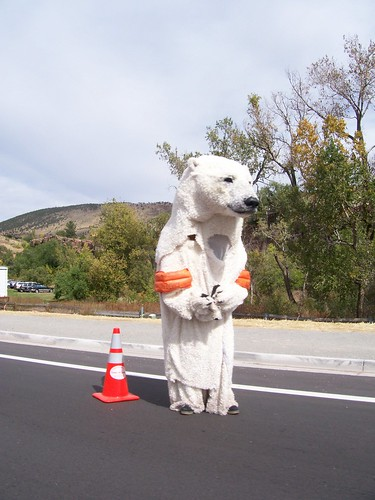 Polar bear?