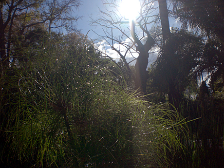 valencia-botanic-garden