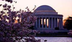 Jefferson Memorial Sunrise (ldrypolcher) Tags: pink light sun water sunrise cherry memorial blossom bloom cherryblossom jefferson rise jeffersonmemorial tidalbasin abigfave theunforgettablepictures