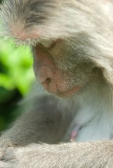Praying for peanuts.... (jazzpic) Tags: monkey nikon flickr praying reservoir d200 kowloon soe 70200mmf28gvr kowloonbay msimons