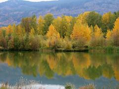 Autumn on the Pass (shesnuckinfuts) Tags: autumn reflection fall colors pond wa snoqualmiepass experiencewa abigfave karmapotd shesnuckinfuts karmapotw october2007 washingtonstateoutdoors eastonponds