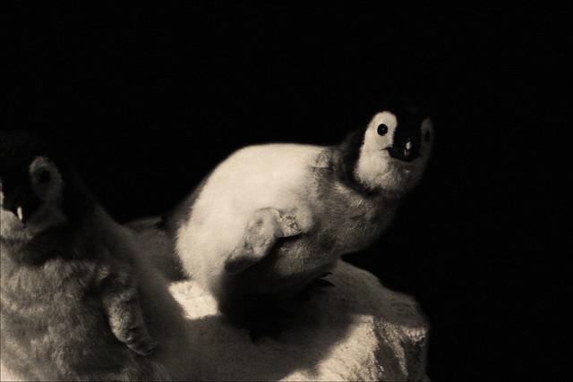 Dead Penguins