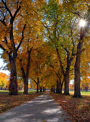 Vanishing Autumn Point @ The CSU Oval (Fort Photo) Tags: autumn fall nature landscape vanishingpoint colorado searchthebest fort path fortcollins co sunburst collins oval csu 2007 elms naturesfinest coloradostateuniversity blueribbonwinner splendiferous passionphotography mywinners abigfave goldenphotographer thegoldenmermaid