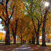 Vanishing Autumn Point @ The CSU Oval - by Fort Photo