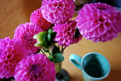 13Nov2007 - pretty flowers (daily pleasure) Tags: pink work desk michigan annarbor dp dahlias pinkdahlias myfunteacup