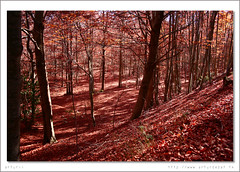 Fageda del Montseny en la tardor. (arturii!) Tags: barcelona road autumn trees red orange brown tree nature beautiful vertical digital canon wow wonderful landscape carpet eos photo leaf amazing europa europe natural path natura catalonia arbres vegetation vermell catalunya capture leak leafs arbre parc catalua gettyimages fulla tardor taronja paisatge vegetaci catalogne naturesfinest awesom cam fulles bonic 10faves catifa marr 400d canoneos400d onlythebestare scenicsnotjustlandscapes