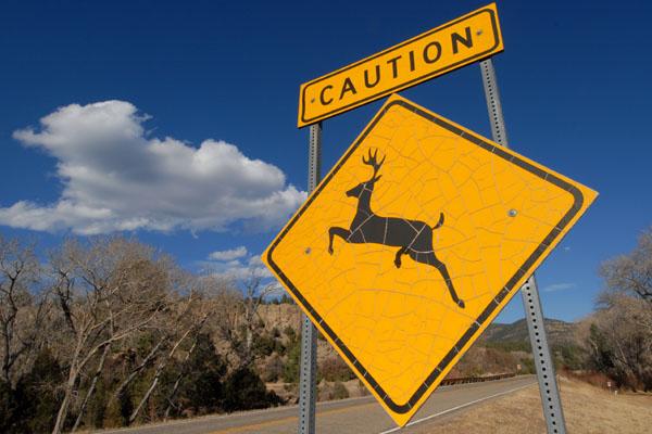 Naughty Deer