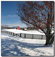 Winter Barn (Lisa-S) Tags: winter shadow red panorama snow ontario canada tree barn rural fence landscape farm lisas soe allrightsreserved themoulinrouge caledon supershot dec09 5067 superbmasterpiece diamondclassphotographer excellentphotographerawards theunforgettablepictures theunforgettablepicture colourartaward artlegacy vertorama thegardenofzen thegoldendreams tup2 copyrightlisastokes gappool