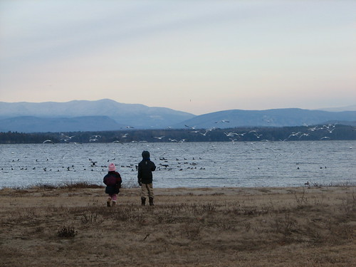 birds on Lake Champlain