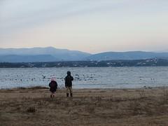 birds on Lake Champlain