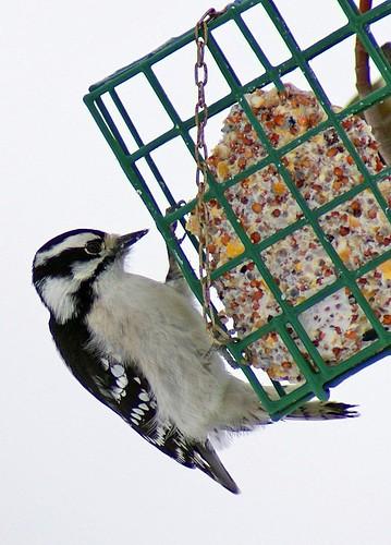 Woodpecker-1-12-6-07