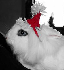 Santa Rabbit (Firenzesca) Tags: pet rabbit nature animal mammal funny merrychristmas soe santaklaus coniglio babbonatale 35faves impressedbeauty flickrdiamond heartawards explorehighestposition14onthursdaydecember272007
