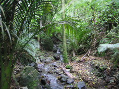 IMG_4101 (kenorrha) Tags: newzealand nznorthisland scenicsnotjustlandscapes