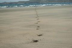 huellas (Analía Acerbo Arte) Tags: mar playa linea huellas ptopiramides