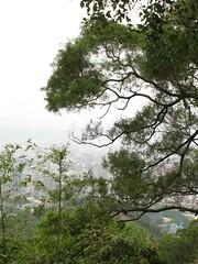 四獸山某處看下去的信義區