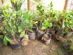 wakaf8 (ummu alia) Tags: pohon wakaf