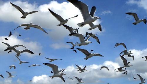 Bonita Springs Snow Birds
