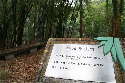 竹崎親水公園36