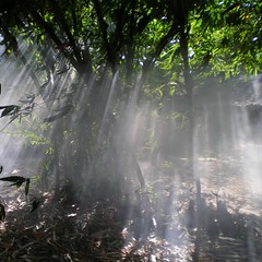 BreakThrough ([Jongky]) Tags: morning mist tree green nature fog indonesia village smoke bamboo explore breakthrough tangerang firstquality jongky banten jongkyna