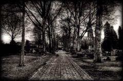 _ (cafe.noir) Tags: trees church monochrome cemetery graveyard d50 dark nikon path stones kirche toned tombstones gravestones hdr ohmstede