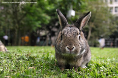 Schoolmate's Rabbit in NTUST (*Yueh-Hua 2013) Tags: cute rabbit bunny green grass animal canon eos explore lovely  q  tamron    ntust  30d   a16 canoneos30d horizontalphotograph  tamronspaf1750mmf28xrdiii  nationaltaiwanuniversityofscienceandtechnology   2008april