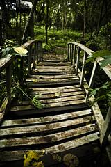 Nature trail (Brian Laborada) Tags: bridge green nature forest trail palawan teampilipinas