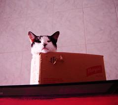 :) (sosgatinhos) Tags: pet cats love cat furry kitten feline chat kittens gatos gato felino neko shelter katz adoption adoo peludo adote abrigo animalwelfare catlover sosgatinhos