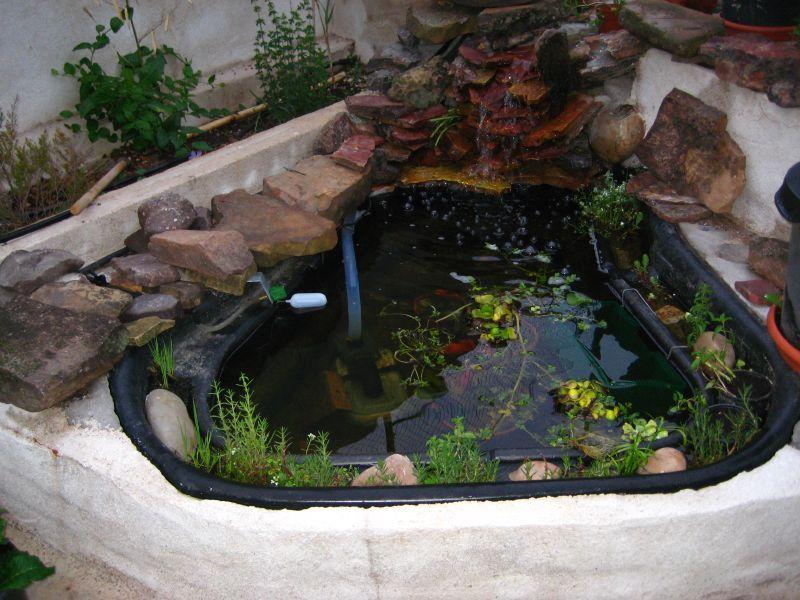 Elestanquecom Ver Tema Estanque Para Principiante - Como-construir-un-estanque-para-tortugas