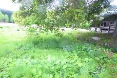 (*suika *) Tags: green japan rural may fromcarwindow    rainydayshot