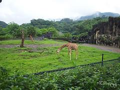 20110602酷節能體驗營 (21) (fifi_chiang) Tags: zoo taiwan olympus taipei ep1 木柵動物園 17mm 環保局 酷節能體驗營