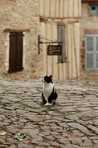 Cordes Cat