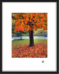 Framed Maple  (avirus) Tags: autumn red orange color tree green fall nature grass leaves contrast dc washington leaf maple vivid frame