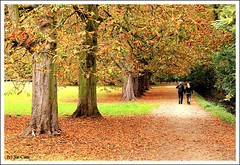 Autumn of Love (Sir Cam) Tags: uk autumn trees cambridge england green fall love leaves couple university colours britain rusty blond kingscollege colleges thebacks blueribbonwinner supershot sircam mywinners abigfave theperfectphotographer