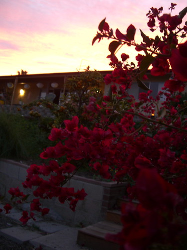 Bougainvillea, house and sky
