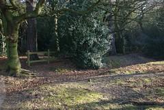 dsc_1879.jpg (Ade Bradshaw) Tags: jan 2008 suttonpark
