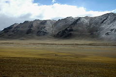 The Lone Ranger. (~FreeBirD~) Tags: life travel yak india snow mountains green clouds landscape one nikon alone power september passion shake destination biker nomad pure mb addict challenge grasslands challenger 2007 confidence loneranger traveler yatri mywinners lovemax manibabbar travelwriter maniya selfquote httpbirdofpreyspaceslivecom httplamenblogspotcom