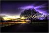 Purple Euphoria (Extra Medium) Tags: california sunset tree night clouds lights evening twilight purple slideshow hdr 3000v120f ♥avision♥ pennvalleyca
