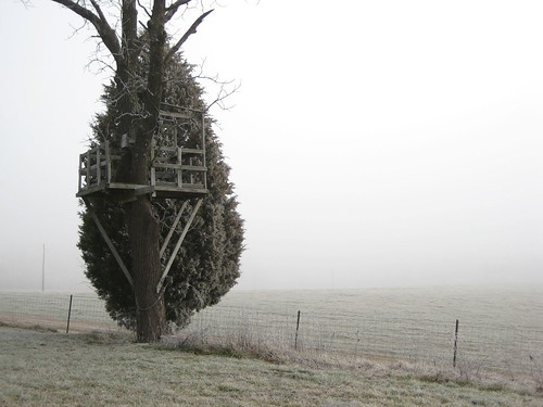 Another view of freezing fog