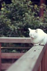..ZZZZzzzz .. (k-ko) Tags: cat walking shrine nap tamron 90mm 2008