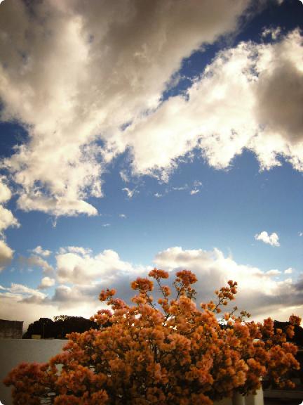 oaxaca sky