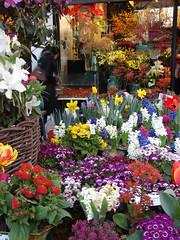 Happy Norooz (Alieh) Tags: flower persian iran eid newyear iranian esfahan isfahan norooz norouz navroz nawruz noruz newroz nauruz      iraniannewyear  nawroz  novruz aliehs alieh  navruz  nauroz nawrz nevruz iranmap  narooz   nowroj navroj navrezornowrouz iranmapcom