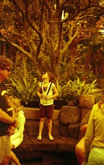 contemplation in redscale (Meleager) Tags: film canon disney magickingdom bluefilter t60 redscale autaut